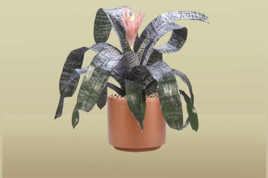 Silver Vase Bromeliad Foliage Design Systems Corporate