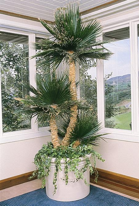 artificial and replica plants | foliage design systems corporate Artificial Office Plants