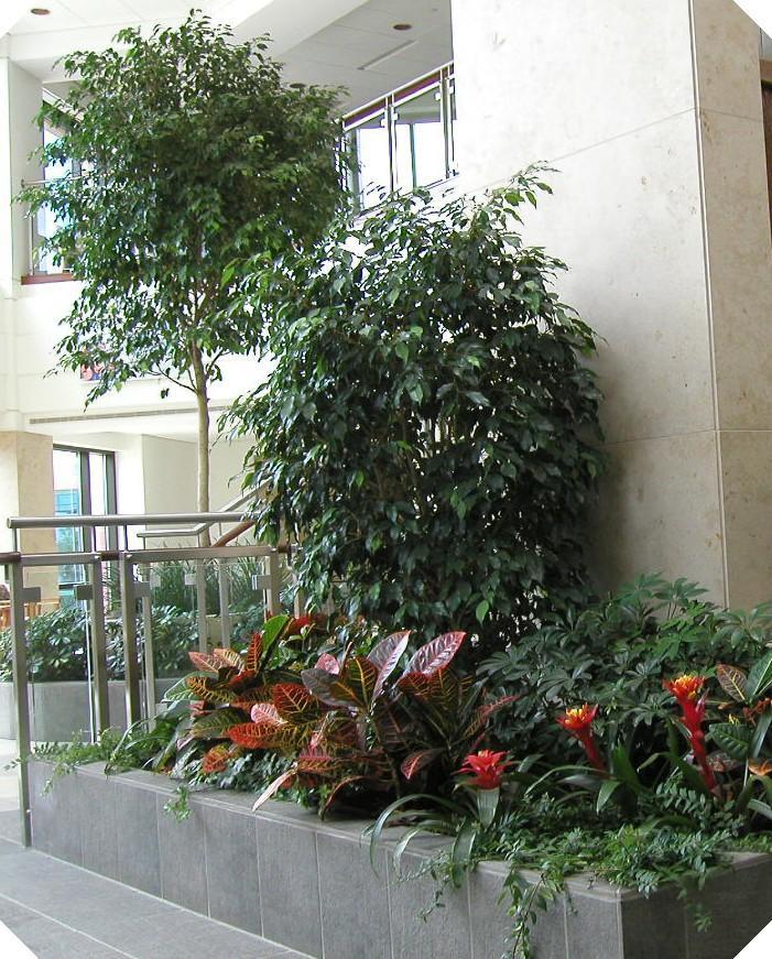 Orlando Florida Foliage Design Systems Corporate