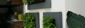 Check out the Award-Winning Green Walls From FDS!