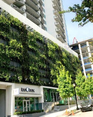 Green Indoor Living Walls