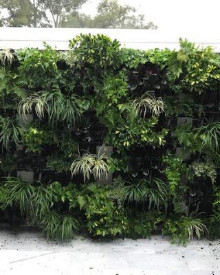 Indoor Living Walls - Interior Floral Design