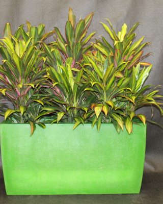 green floor plant planter