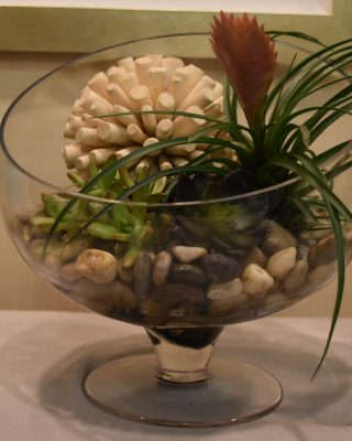 succulent garden in glass bowl